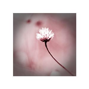 kvet-011-upr-ram.jpg