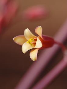 kvetina-023-men.jpg