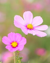 kvetina-073-vyr-men.jpg