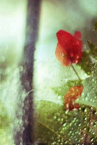 kvetina-5-upr-2.jpg