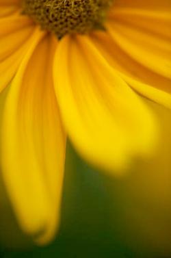 kvetina-m.jpg