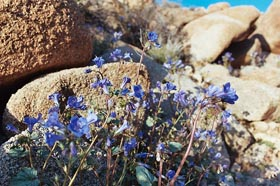 kvetiny-men.jpg