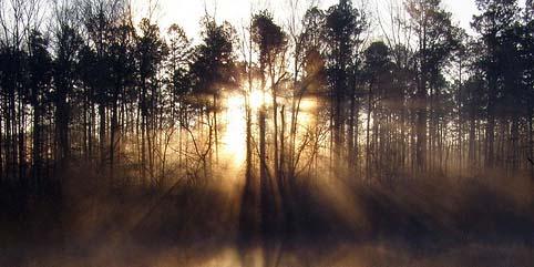 paprsky-stromy.jpg