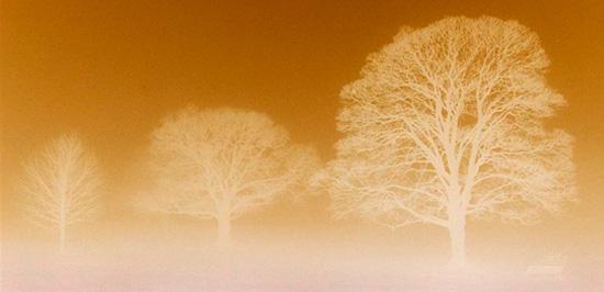 tri-stromy-men.jpg